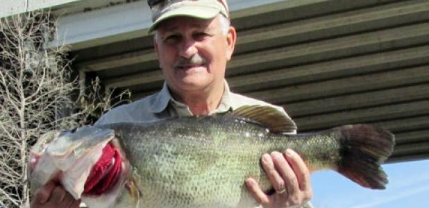 Robert Whitehead of Austin caught Toyota ShareLunker 555 from Lake Austin Feb. 21. The fish weighed 13.19 pounds and was 27.28 inches long and 19.84 inches in girth.