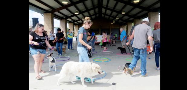 CCLP/BRITTANY FHOLER - Dogs and their owners walked around in a circle for a Cakewalk at the 3rd annual Pawzapalooza Paws and Bras held Saturday afternoon at Ogletree Gap.