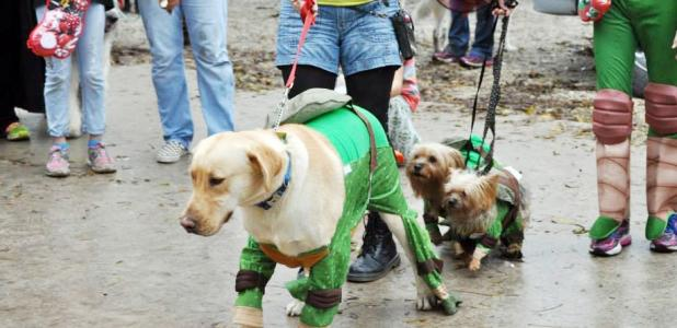 Courtesy Photo - Dogs and their owners dressed as the Ninja Turtles won the Howl-O-Ween Puppy Pawlooza costume contest last year. The 1-mile walk/fun run and costume contest kick off the day of activities including a swim in the city pool, a small dog race, dog demonstrations, obstacle course, and more.