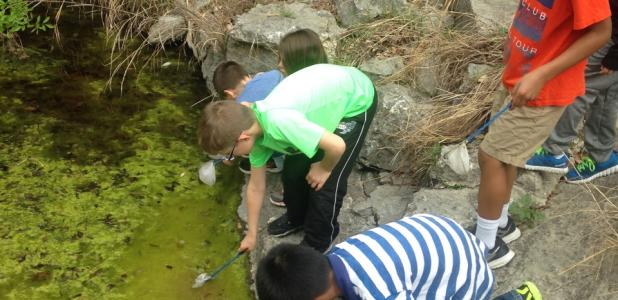 COURTESY PHOTO CCISD 2nd graders wade into the creek to collect aquatic critters and predict water quality in the urban waterway at Barton Springs which is fed by a natural aquifer.