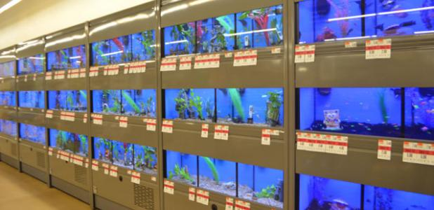 CCLP/LYNETTE SOWELL - Pet Supplies Plus has a selection of fish and other small animals for sale, in addition to supplies for dogs, cats, reptiles, birds and rodents. The store officially opens for business today.