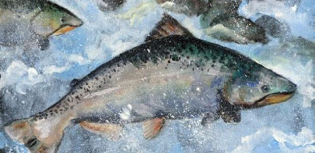 Tatyana Panchishna of Flower Mound won first place in grades K–3 of the Texas State-Fish Art Contest with an acrylic drawing of a king salmon.