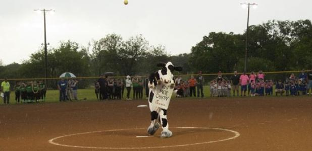 The Chick-Fil-A cow throws out the first pitch, ushering in the softball season in the inclement weather Monday evening.