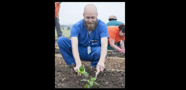 Metroplex nurse Grant Sitton plants a tomato plant for the vegetable gardening April 17.