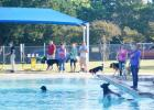 CCLP/BRITTANY FHOLER - Dogs got to splash around in the pool at the 2nd annual Howl-O-Ween Puppy Palooza held at Copperas Cove City Park Saturday morning.